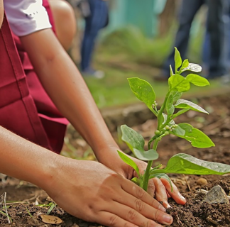 Hands planting a seedling