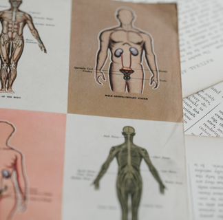 Anatomical drawings of the main human body systems